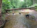 River 4 July2013